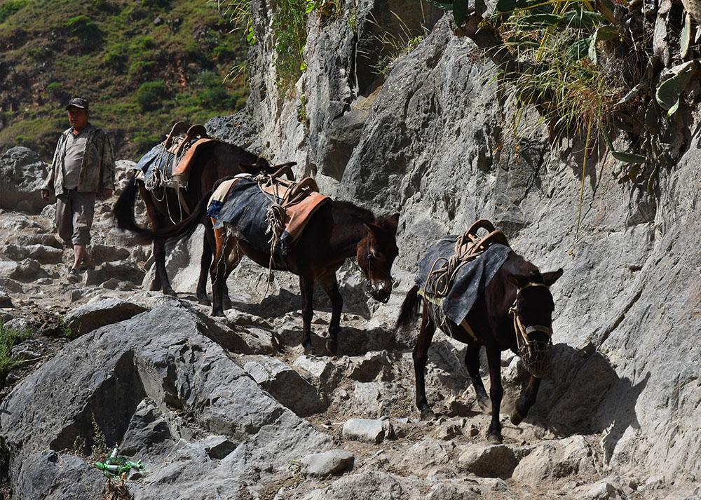 去山上驮柴的村民。张国华 摄DSC_3395_.jpg