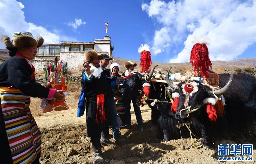(社会)(3)西藏:春耕大典开启新春第一犁