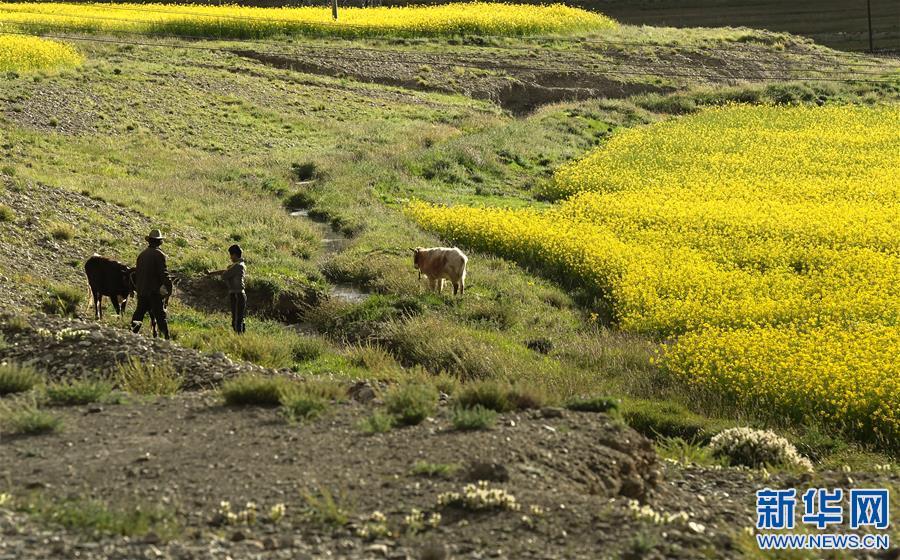 (美丽中国)(2)西藏:无限风光在高原