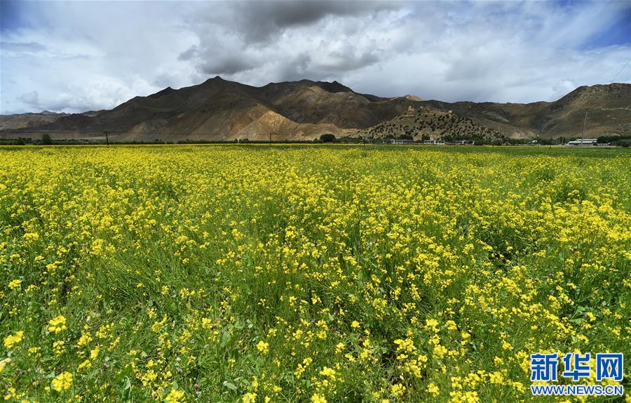 (美丽中国)(4)西藏:无限风光在高原