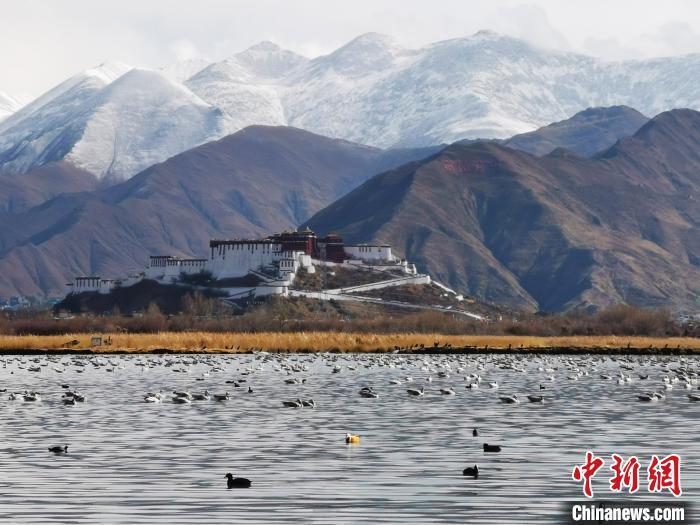 西藏统筹推进全区自然保护地整合优化