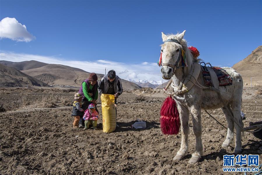 (经济)(3)西藏:珠峰脚下春耕忙