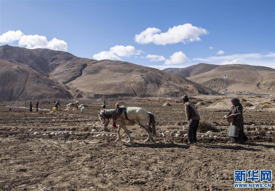 (经济)(1)西藏:珠峰脚下春耕忙