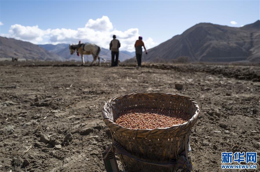 (经济)(4)西藏:珠峰脚下春耕忙