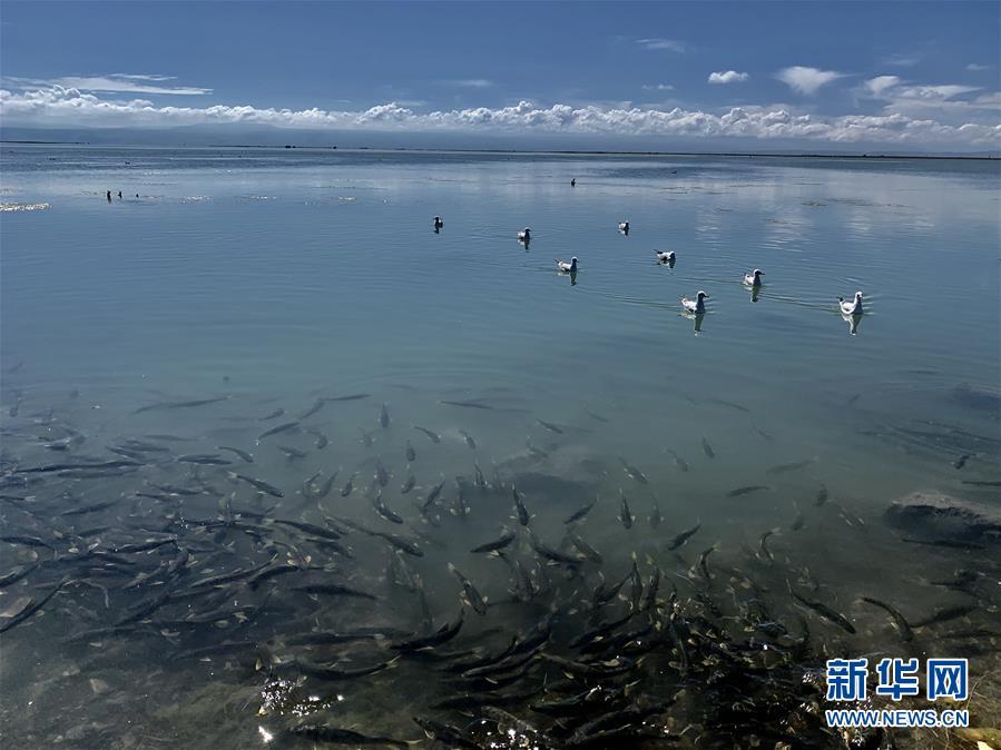 (图文互动)(3)青海积极推进青海湖国家公园规划建设