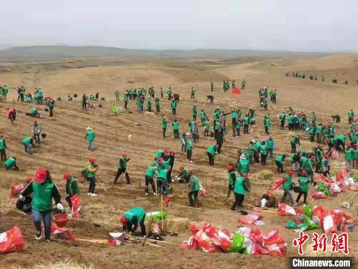 4月26日至27日,黄河沿岸沙化区植树治沙活动正在甘肃玛曲展开。 杨旭明 摄