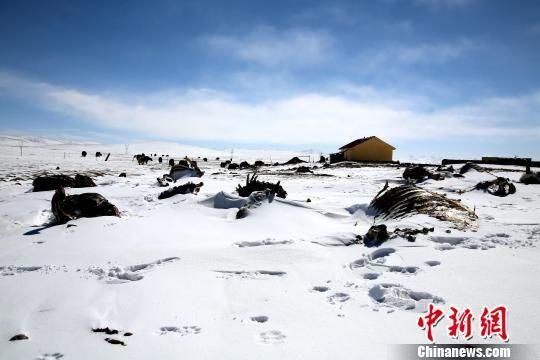 图为青海南部雪灾区域一角。 钟欣 摄