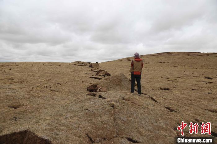 图为地震鼓包。 青海省地质调查院 供图