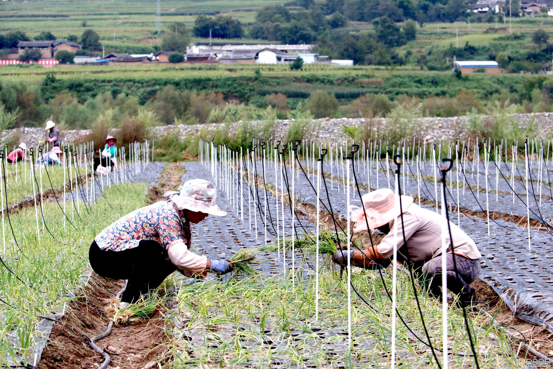 香格里拉市:产业富民 振兴乡村
