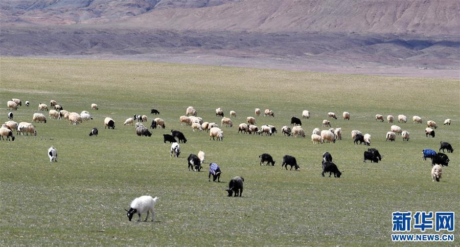 (美丽中国)(2)西藏羌塘风光美