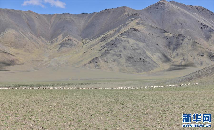 (经济)(1)西藏牧区迎来挤奶季