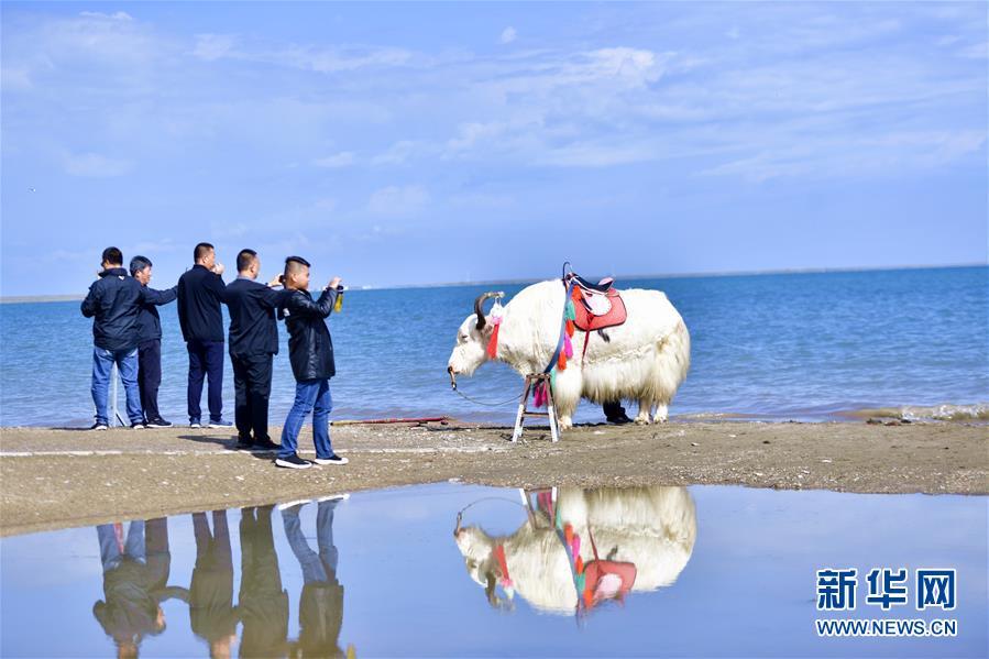 (环境)(6)秋游青海湖