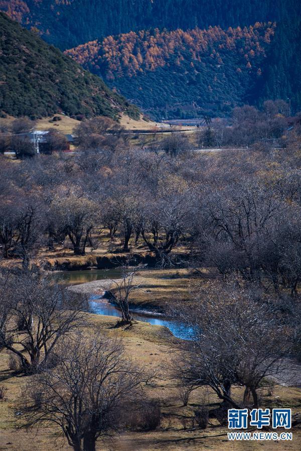 (环境)(2)秋色斑斓普达措