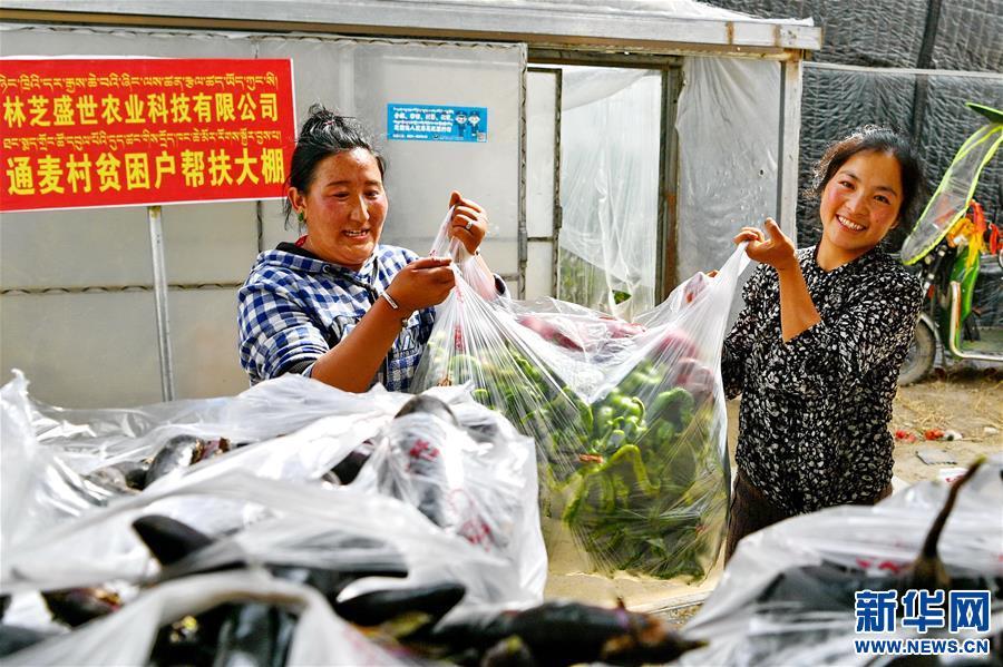 """(经济)(5)西藏林芝:蔬菜种植 鼓起百姓""""钱袋子"""""""