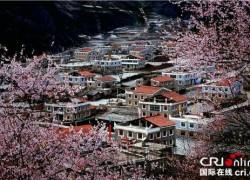 四川省阿坝州:人间三月芳菲始 理县赏花正当时