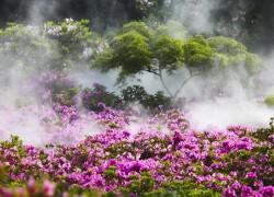 迪庆州邀你5月到香格里拉赏杜鹃花海