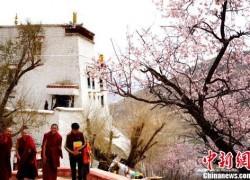 拉萨4月山寺桃花始盛开