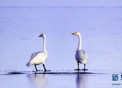亲近青海湖,感受生灵之美