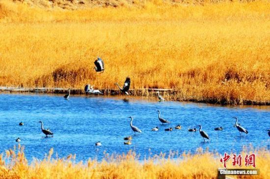 资料图:青海省海西州格尔木湿地。祝桂福 摄