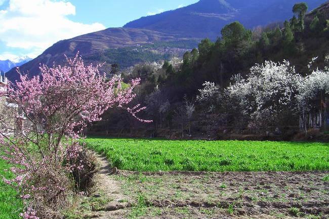 中国藏族网通讯 近日,笔者从四川省甘孜州丹巴嘉绒藏族乡村风情节筹备领导小组会议上了解到,今年风情节的举办时间定于10月22日至28日,开闭幕式将分别在该县极具嘉绒文化特色的中路、巴底两乡举行。 2011中国四川丹巴嘉绒藏族乡村风情节,将紧紧围绕走进中国最美丽的乡村主题,以乡村为重点,主推嘉绒民间原生态歌舞、选美比赛、嘉绒女子成人仪式等重头节目,突出展示该县乡村民族风情文化,挖掘传承原生态嘉绒藏族文化精品。 据介绍,本次风情节筹备领导小组下设6个工作组,将分别负责活