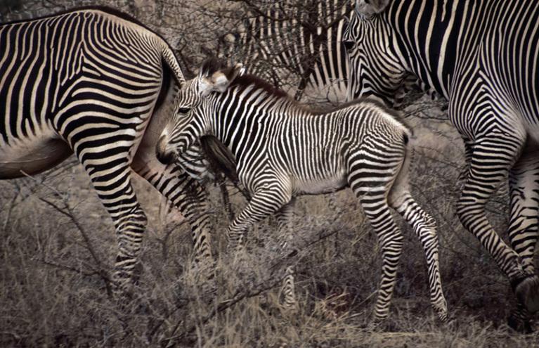 迁徙泛指某种生物或鸟类中的某些种类和其它动物